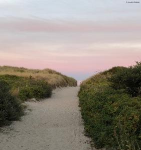 Hulsig-Beach-Skagen-in-Summer-giftofparis.com